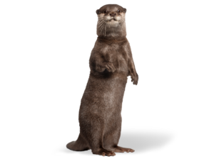 OTTER Website Rollover